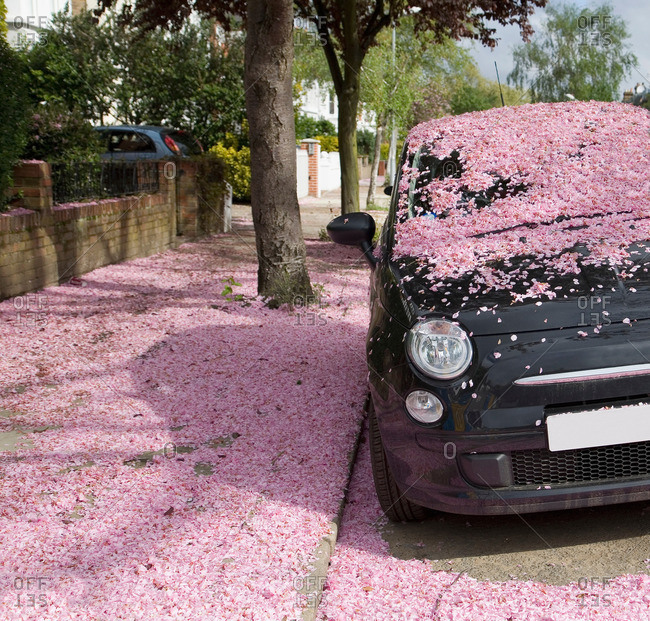 Car covered in pink blossom petals