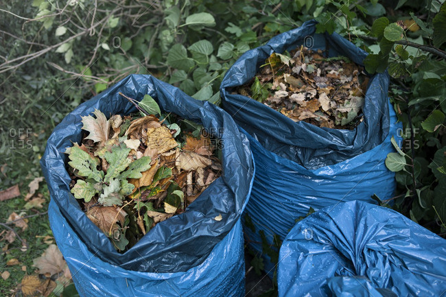 Plastic bags filled with fallen leaves