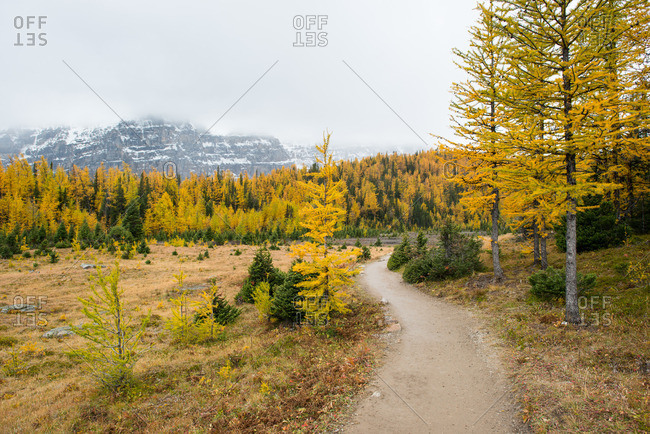 Path through yellow larch trees in a mountain valley during fall