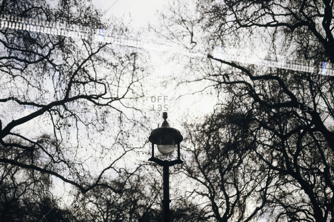 Lantern and tree branches in a city park