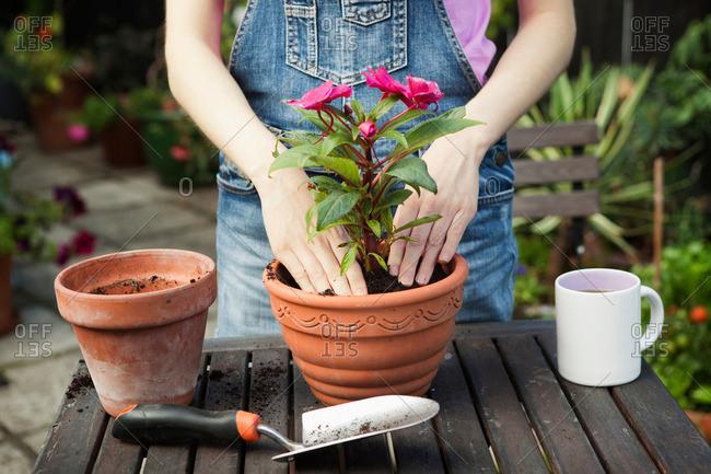Пересадка комнатных растений — FloweryVale.ru