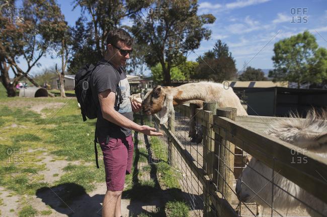 Man feeding goats at petting zoo