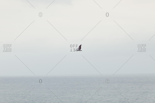 Solitary pelican flying over the sea
