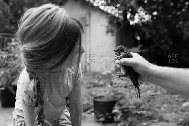 Young girl checks out a bird in man's hand