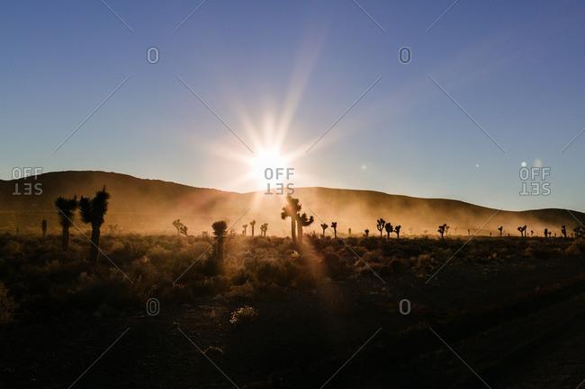 Sunrise over desert with Joshua trees