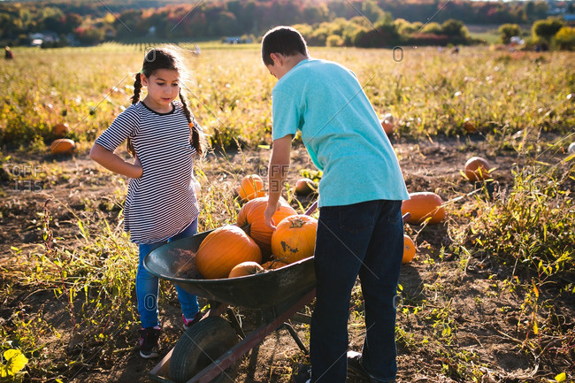 Siblings filling a wheelbarrow with pumpkins
