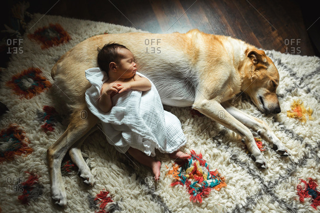 Newborn baby lying down on the carpet against the family dog