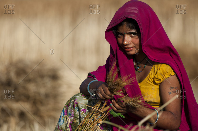 Bisalpur, Uttar Pradesh, India - March 24, 2015: Teenage girl harvesting wheat, Bisalpur, Uttar Pradesh, India