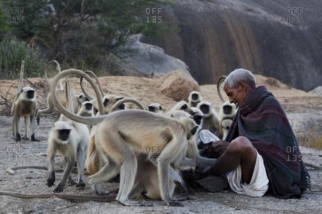 India - November 22, 2014: Man sitting with monkeys, India