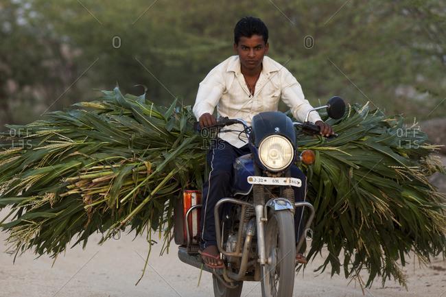 Old Delhi, India - April 25, 2015: Man on motorbike transporting sugarcane in Old Delhi, India