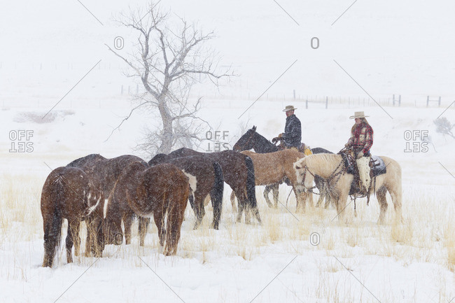 Cowboys standing with a herd of horses in a snowy pasture