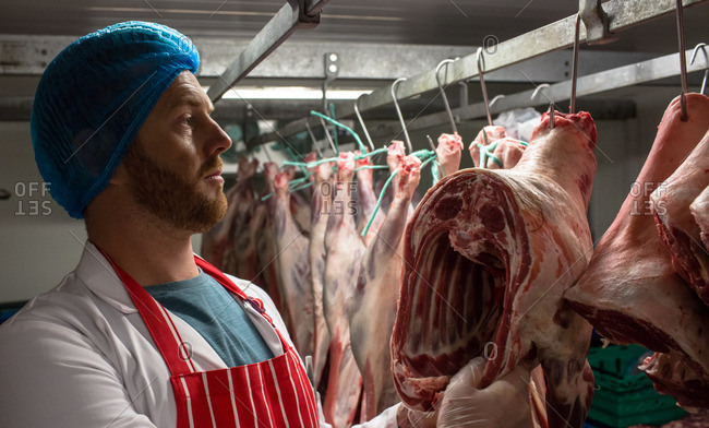 Butcher hanging red meat in storage room at butchers shop