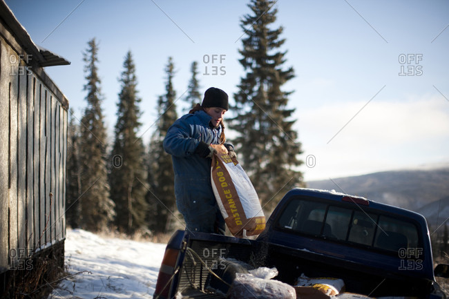 Sunnydale, Yukon Territory, Canada - October 26, 2014: A woman unloads food for her sled dog team in Sunnydale, Yukon Territory