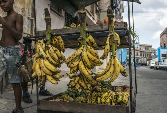 Havana, La Habana, Cuba - April 29, 2014: Bunches of bananas and plantains hanging from a street vendor's cart along with oranges and coconuts in Havana, La Habana, Cuba. A shirtless Cuban boy walks by
