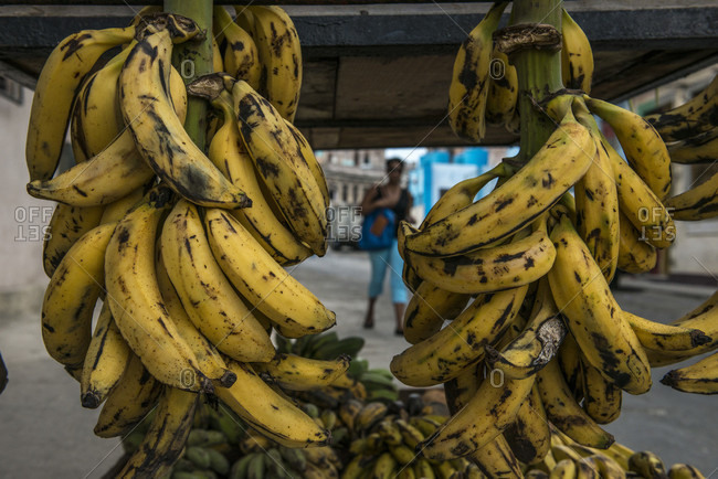 Havana, La Habana, Cuba - April 29, 2014: Bunches of bananas and plantains hanging from a street vendor's cart in Havana, La Habana, Cuba. A woman shopper can be seen walking on the street in the background