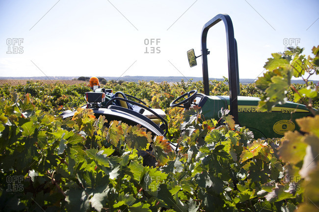 Ribera del Duero, Spain - September 30, 2016: Tractor in a vineyard at Ribera del Duero, Spain