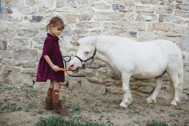Little girl feeding a small white pony a carrot
