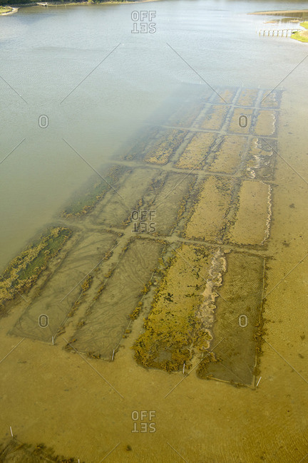 USA- Aerial photograph of clam bed aquaculture on the Eastern Shore of Virginia