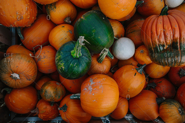 Harvested pumpkins in a pile