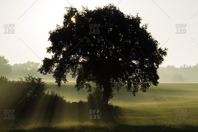 Germany- Upper Bavaria- Landsberied- Backlit tree at sunrise