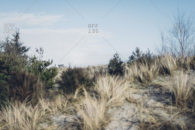 Denmark- Hals- dunes at the Baltic Sea