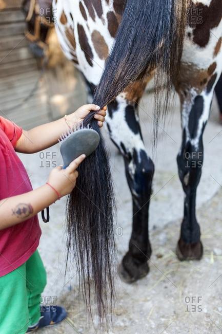Little boy brushing horse tail