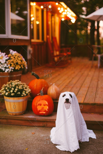 Dog in a ghost costume