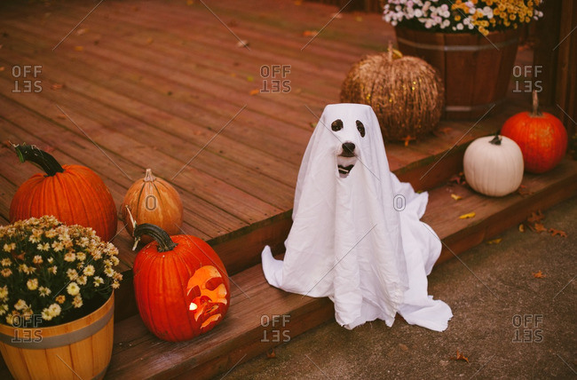 Dog on porch in a Halloween costume