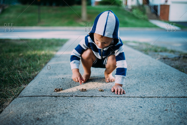 A boy collecting acorns