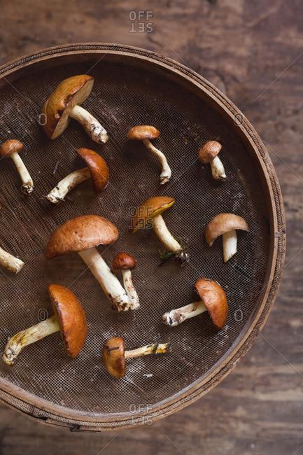 Mushrooms in wooden bowl
