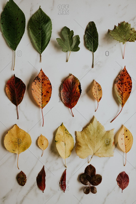 Arrangement of different autumn leaves on marble background