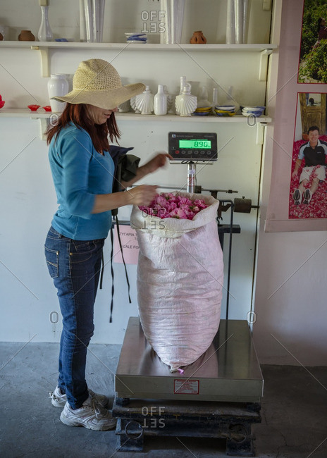 Agros, Cyprus - May 7, 2015: Woman weighing roses at Venus Rose cosmetics