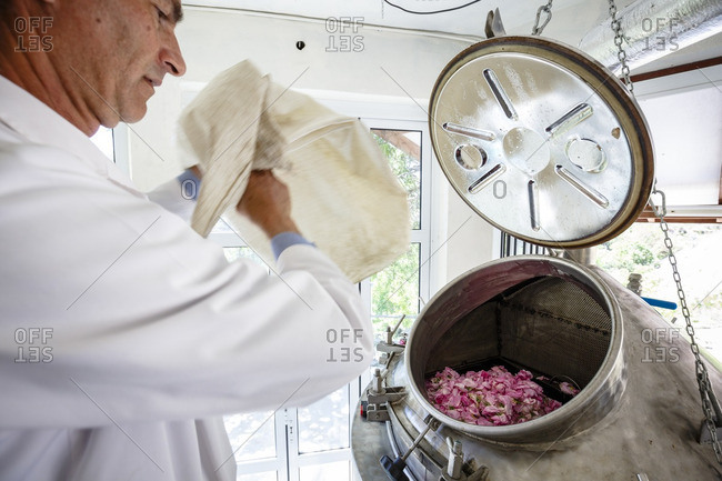 Agros, Cyprus - May 7, 2015: Man dumping bag of roses into cauldron at the distillation plant of Venus Rose cosmetics
