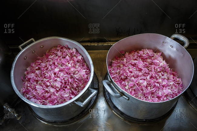Rose petals in two pots