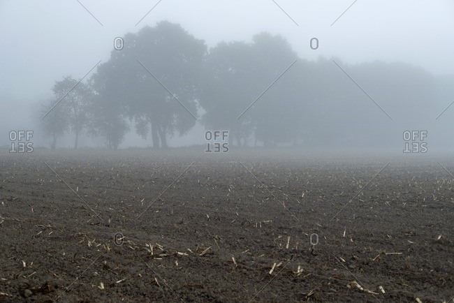 Agricultural land with trees in mist in The Netherlands