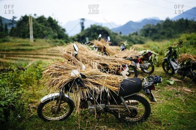Sapa, Vietnam - September 28, 2016: Motorbikes laden with rice stalks
