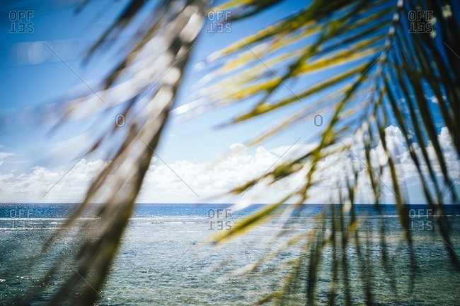 Ocean seen through palm fronds