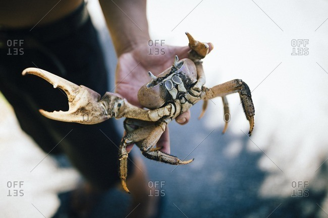 A young man holds a land crab