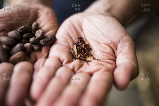 Hand holing  crushed roasted cocoa beans