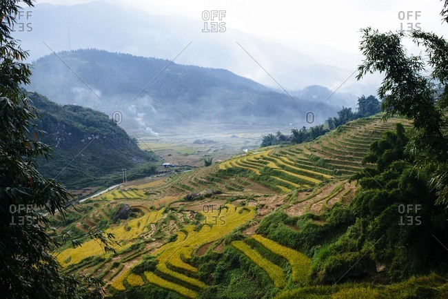 Terraced rice fields in mountains of Vietnam