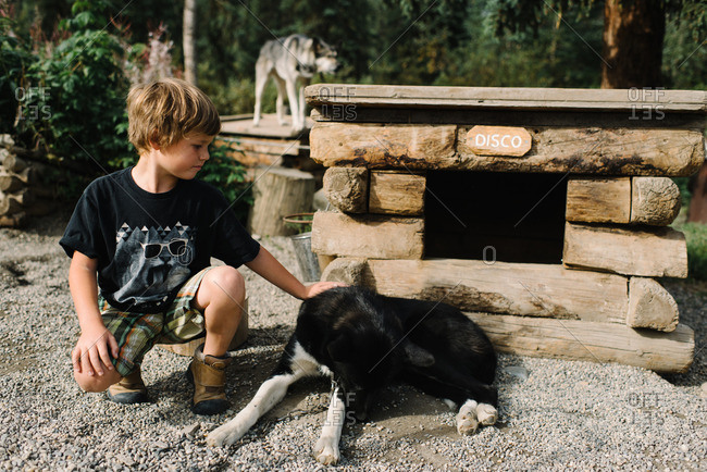 Boy petting a sled dog, Denali National Park