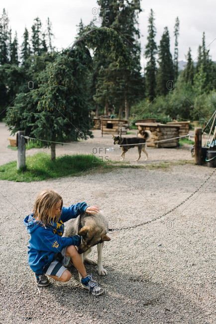 Boy with a sled dog on chain