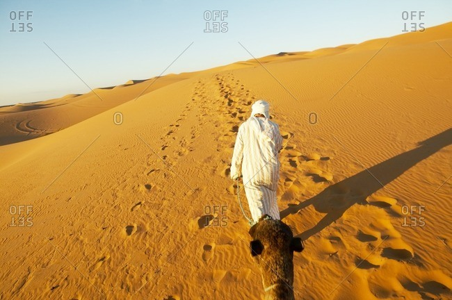 Person walking in desert with camel