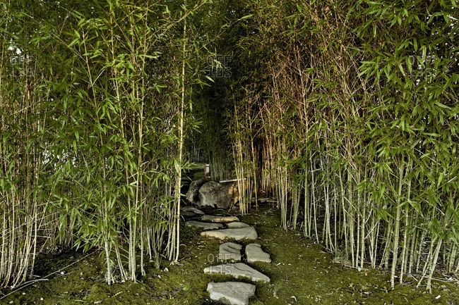 Path leading into bamboo grove