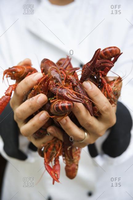 Chef holding handful of shellfish