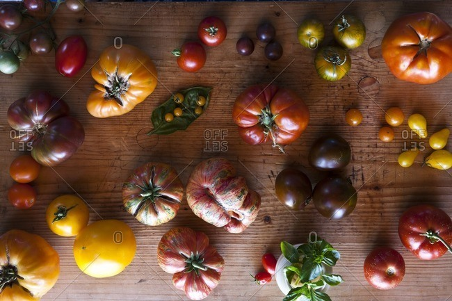 Variety of tomatoes - Offset Collection