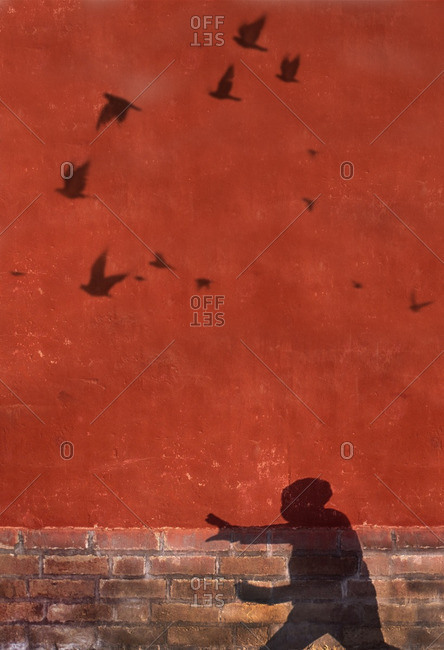 Shadow of a person doing tai chi exercises and birds in the Forbidden City in Beijing, China