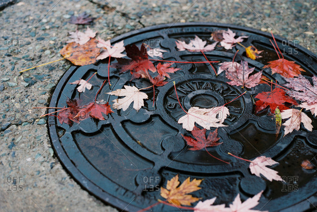 Autumn leaves on a manhole cover