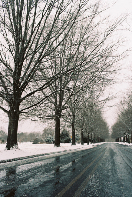 Bare trees lining a wet, snowy street