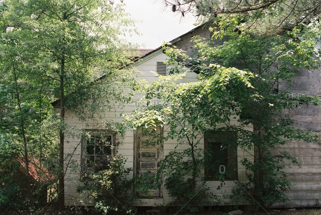 Trees growing in front of an abandoned old house